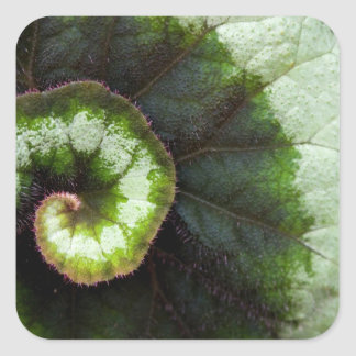 Snail Begonia Leaf Square Sticker