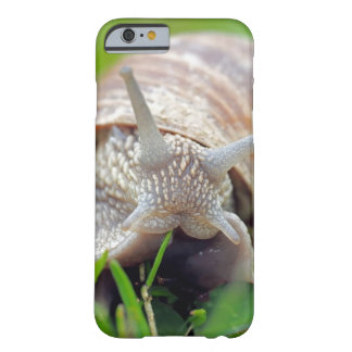 Snail Close up Nature Photography Cell Phone Case
