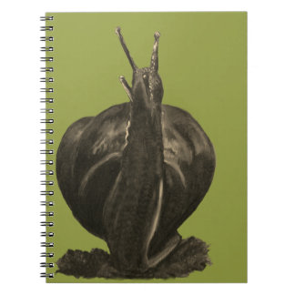 Snail Drawing Photo Notebook (80 Pages B&W)