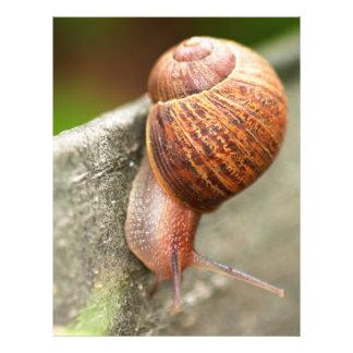snail flyer