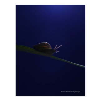 Snail going out on a limb postcard