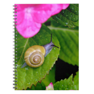snail notebook