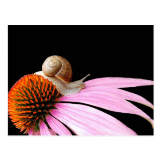 Snail on a flower postcard
