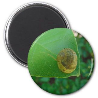 Snail on a magnolia leaf 2 inch round magnet