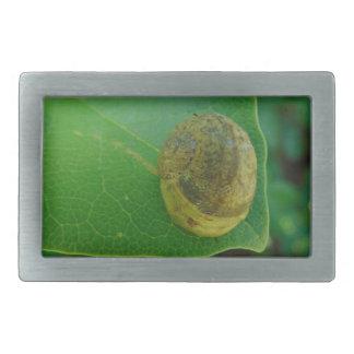 Snail on a magnolia leaf belt buckles