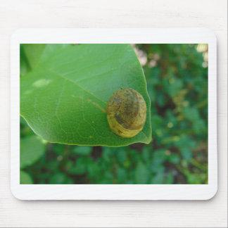 Snail on a magnolia leaf mouse pad