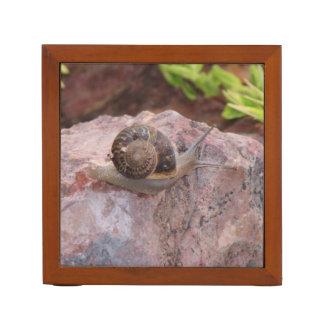 Snail on a Rock Desk Organizer