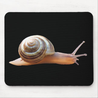 Snail on black ~ mousepad