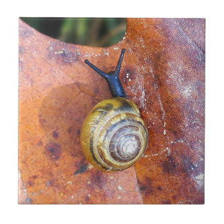 Snail on Brown Leaf Ceramic Photo Tile