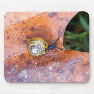 Snail on Brown Leaf Mousepad