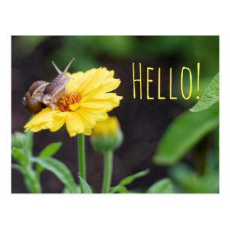 Snail on flower postcard