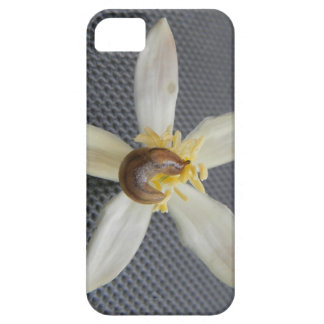 Snail on Orchid iPhone 5 Cover