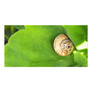 Snail Picture Card
