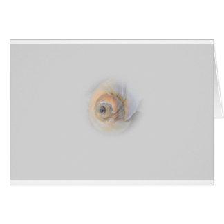 snail Schnecke Muschel Shell Greeting Card