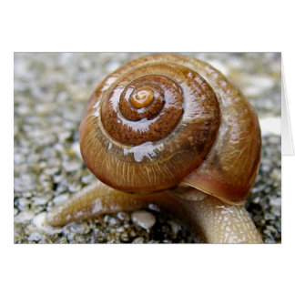 Snail Shell Greeting Card