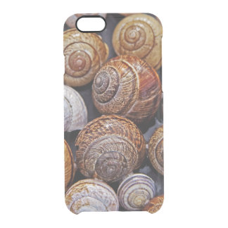 Snail Shell Clear iPhone 6/6S Case
