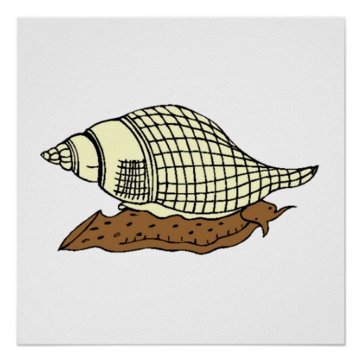 Snail Shell Posters