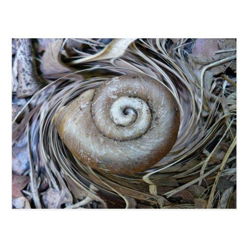 Snail Shell Spiral Postcard
