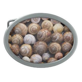 Snail Shells Belt Buckles