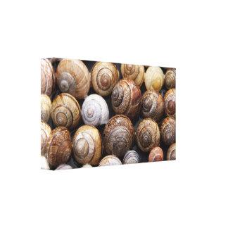 Snail shells canvas print