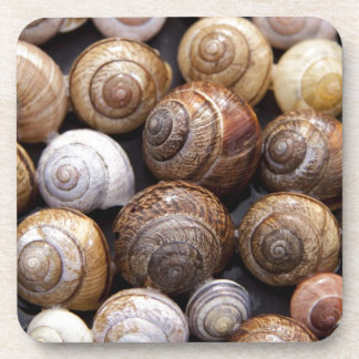 Snail Shells Drink Coasters