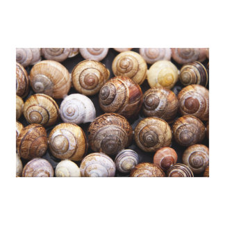 Snail Shells Gallery Wrapped Canvas