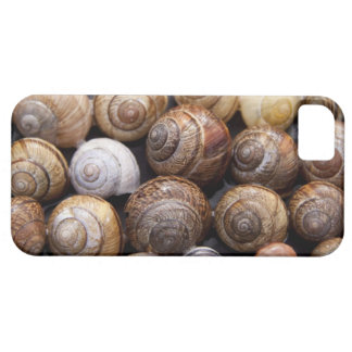 Snail Shells iPhone 5 Cases