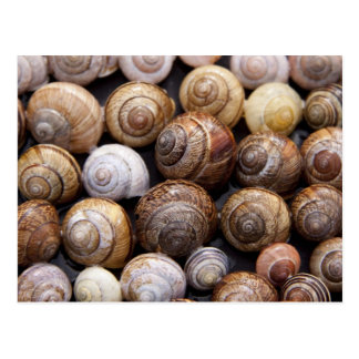 Snail Shells Post Card