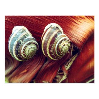 Snail Shells Postcard