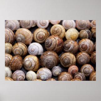 Snail Shells Poster