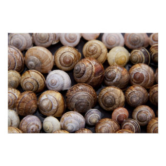 Snail Shells Posters