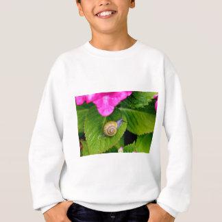 snail sweatshirt