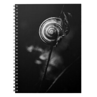 snail tail spiral notebooks