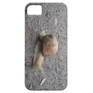 snail walk iPhone 5 cover