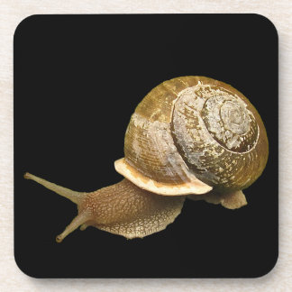 Snail with Shell Drink Coasters