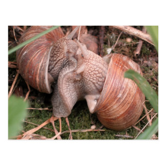 snails in love postcard