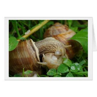 Snails Love Kiss Card