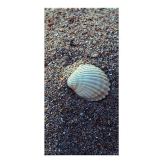 Snailshell Photo Greeting Card