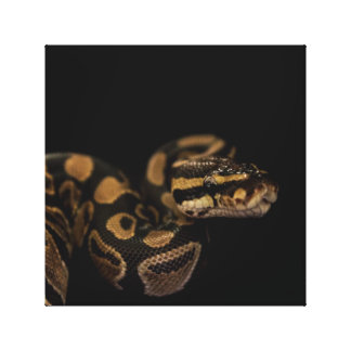 Snake Accent Home Decor Stretched Canvas Print