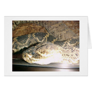 Snake Cards