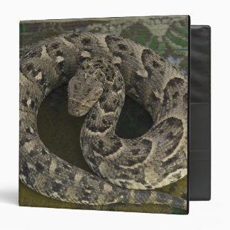 Snake Charmer's African Puff-adder Bitis Binders