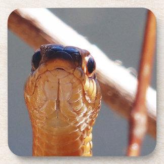 snake coaster