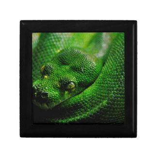 Snake Country Trinket Box
