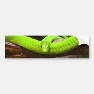 Snake Green Mamba Animal Scary Party Destiny Bumper Sticker
