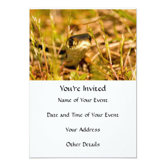 Snake in the Grass Card