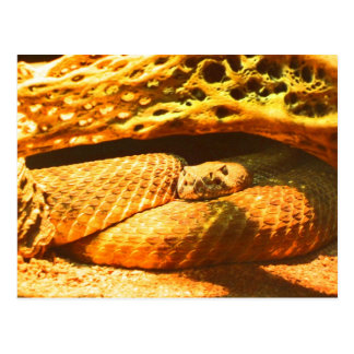 Snake Post Cards