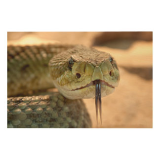 Snake wood wall art wood canvases