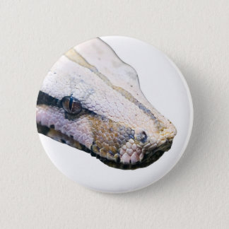 snakes- amazonian constrictor boa 2 inch round button