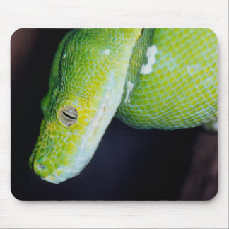Snakes on a Mouse Pad