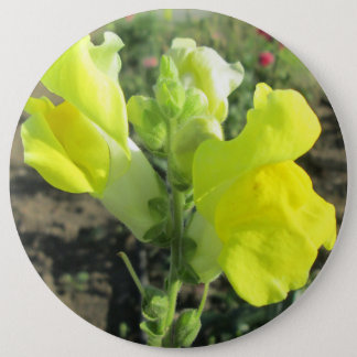 Snapdragon Yellow Flower 6 Inch Round Button